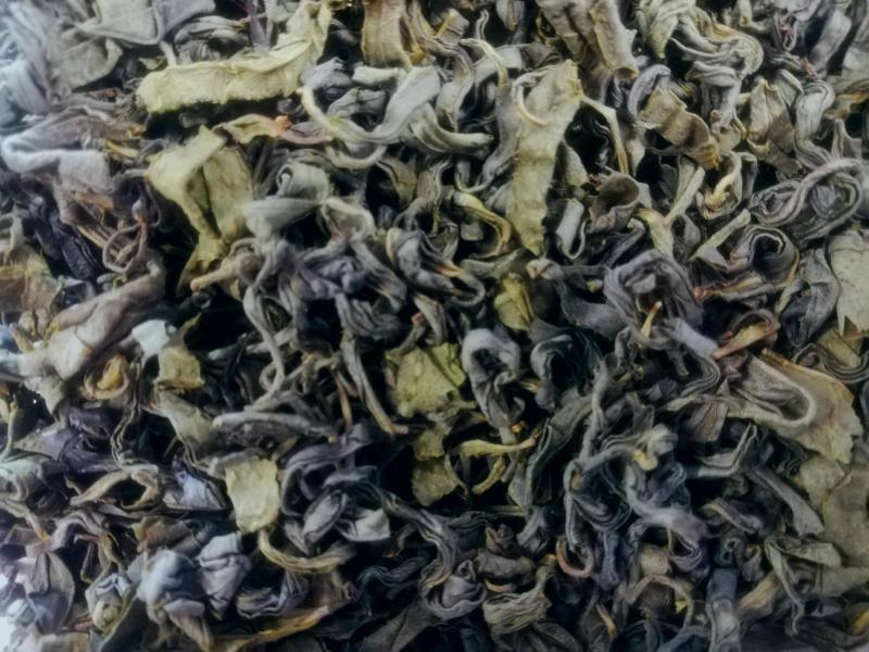 Georgien OP Grüner Tee